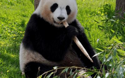 Afbeeldingen comprimeren – wat een panda kan betekenen voor je website